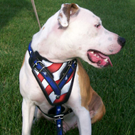 "Pitbull Harness of Leather ""Stars and Stripes"""