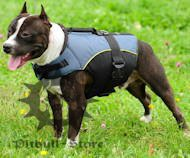 Pitbull Outdoor nylon dog harness UK