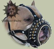 Royal spiked leather dog muzzle for Pitbull