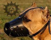 Light Everyday Leather dog