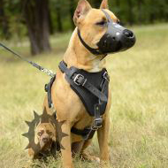 Amstaff Harness for Walking and Training, Bestseller