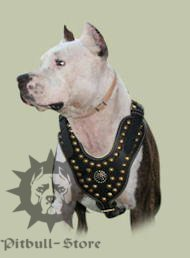 Royal Studded Dog Leather Harness for Pitbull UK ✺