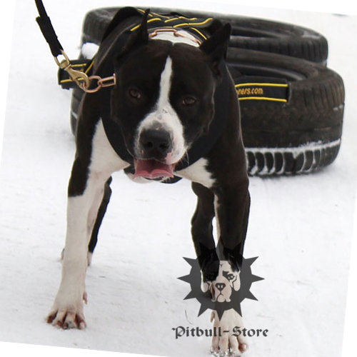 amstaff dog pulling harness