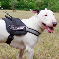 Bull Terrier Harness UK
