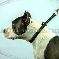 Amstaff Rolled Leather Slip Collar - 12 mm