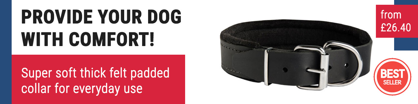 Padded Dog Collar of Felt-Lined Leather for Bull Terrier