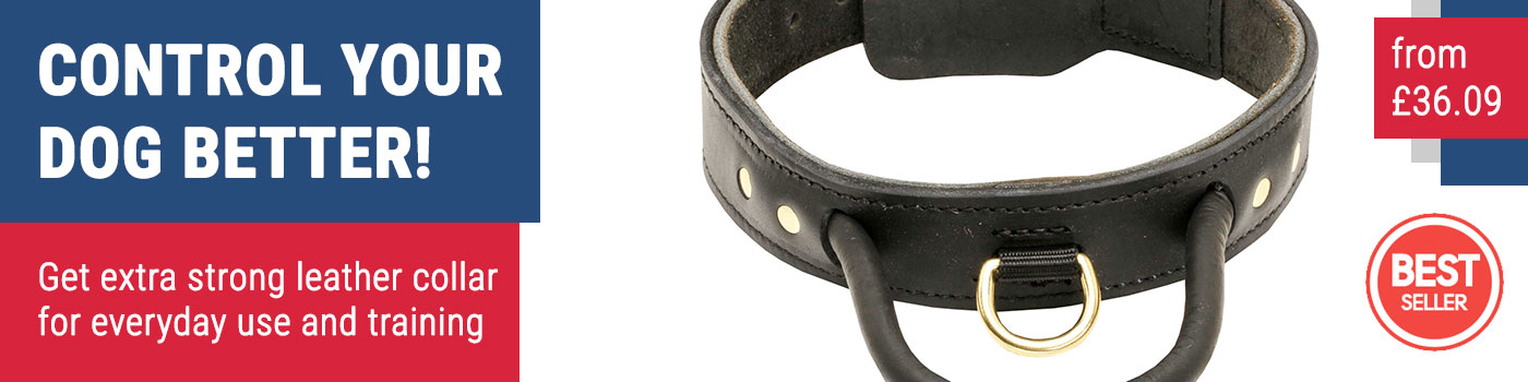 Agitation Dog Collar of Leather for Amstaff & Bull Terrier