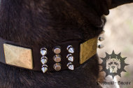 Spiked Dog Collar for Stafford | Studded Dog Collar