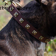 Studded Dog Collar for Staffordshire Terrier