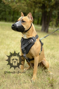 Protection Dog Harness for Stafford Training | Safety Harness