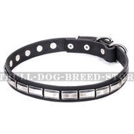 "Staffy Leather Dog Collar ""Refined Classic"" FDT Artisan"