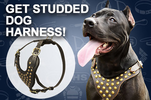 Pitbull Harness for Sale