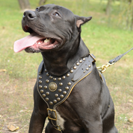 Royal Studded Dog Leather Harness for Pitbull,