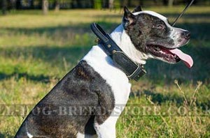 Thick Dog Collars for Pitbulls