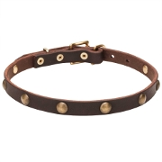 Thin Dog Collar of Cute Vintage Design