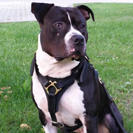 Dog Training and Tracking Harness of Leather