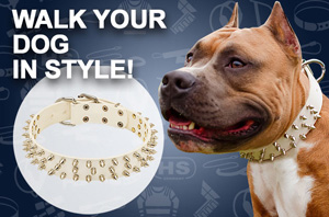 Buy Pitbull Collars for Sale