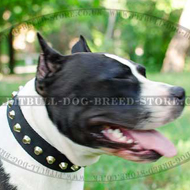 Nylon Dog Collar with Nickel Pyramids for Amstaff