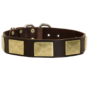 Wide Dog Collar with Massive Brass Plates for Staffy