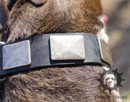 Large Dog Collar with Nickel Plates | Wide Dog Collar, UK