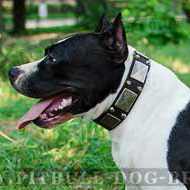 Leather Dog Collar with Nickel Plates & Studs for Amstaff