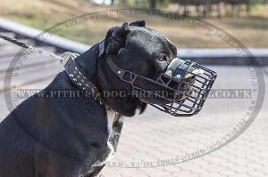 Winter Muzzle for Dog
