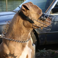 Wire Dog Muzzle for Staffordshire Bull Terrier