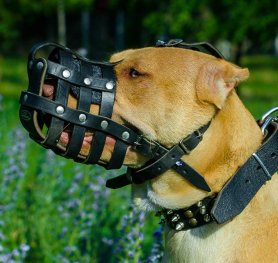 Choosing the Best Dog Muzzle